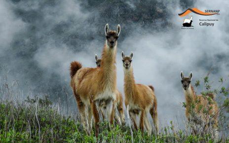 Santuario y Reserva Nacional de Calipuy
