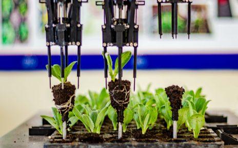 sector agroindustrial liberteño plantines